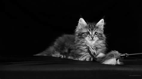 2560x1440 cat wallpaper. WQHD 1440p (Wide Quad HD) 16:9 ...