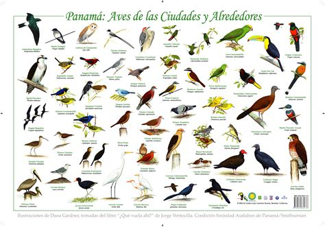AVES | ANIMALES