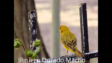 Aves con sus Nombres - YouTube