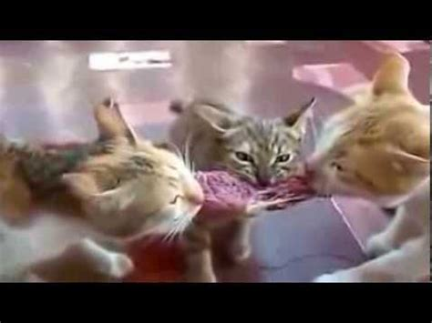 Best Funny Animal Videos Ever!! Funny Cat Videos ...