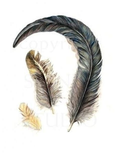 BIRD FEATHER II ORIGINAL ART, REALISTIC DRAWING Drawing, P ...