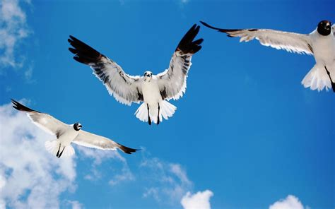Birds Flying In The Sky Wallpaper - HD Wallpapers