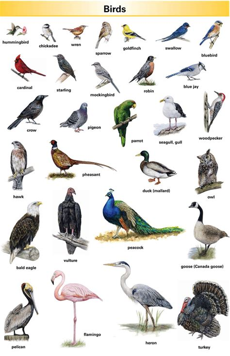 Birds Pictures And Names English