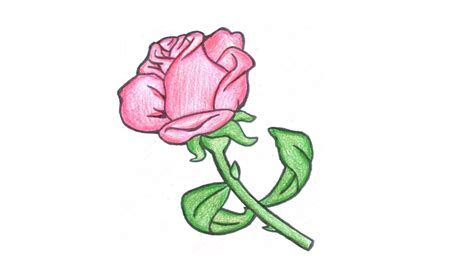 Como desenhar uma Rosa (flor) - How to Draw a Rose (flower ...