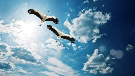 Flying Birds Sky Nature Full HD Wallpapers - New HD Wallpapers