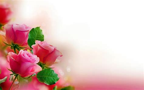Fondos de flores, Wallpapers HD Gratis