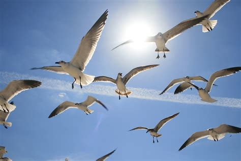Free photo: Flying, Birds, Sea, Birds Flying - Free Image ...