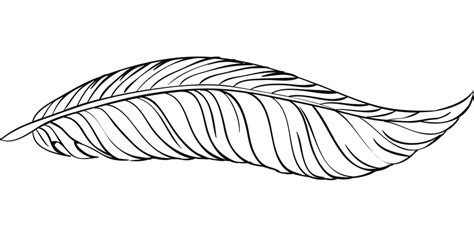 Free vector graphic: Pen, Feathers, Bird, Animal - Free ...