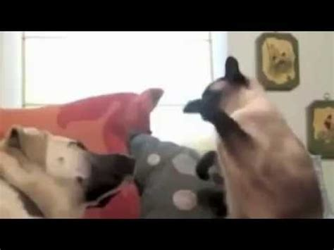 Funniest cat video ever (by Bill Curtis) - YouTube