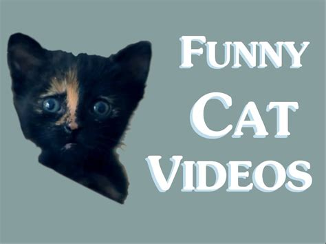 Funny Cat Videos (Clean) New 2014 - Funny clean cat video ...