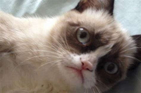 Grumpy Cat : Photos + Video