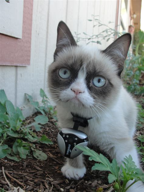 grumpy cat video | Hd Wallpapers