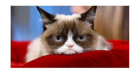 Grumpy Cat Video: Il video originale - Cose di Gatti