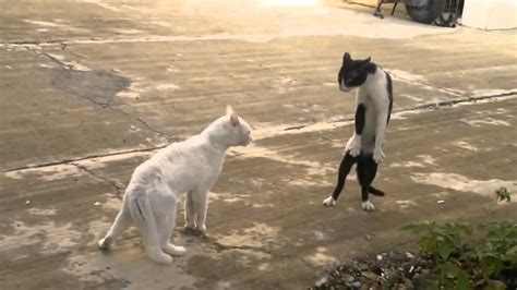 LOL Cats FAIL Compilation - YouTube