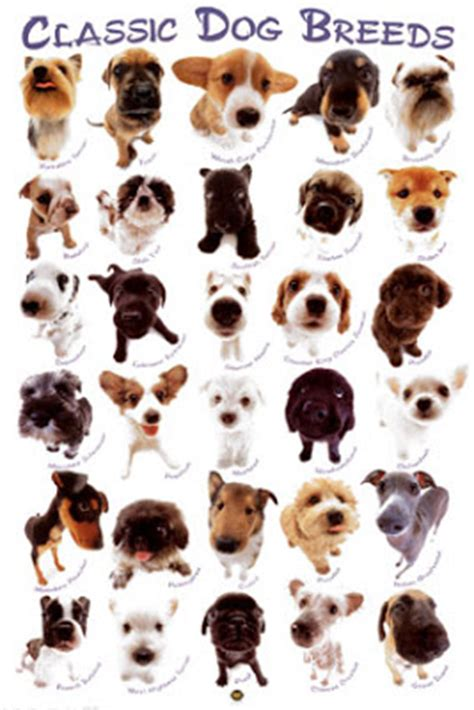 My Top Collection: All types of dogs