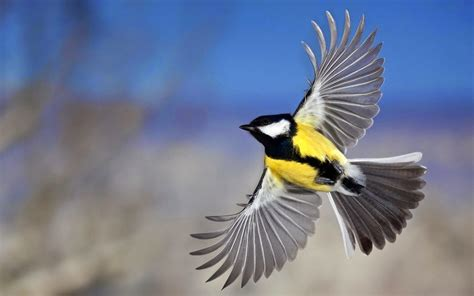 wallpapers: Flying Birds Wallpapers